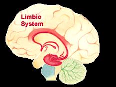 limbic_sm